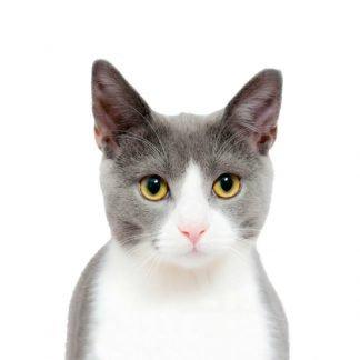 Promotional Cat Accessories