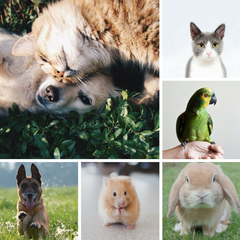 Its National Pet Day - Promotional Pet Accessory Gift Ideas Feature Image
